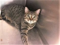 LOLA – 22101 - Super Urgent Shelter Cats These animals are either high risk, injured or have previously appeared on the To Be Destroyed list and survived. They are in danger of being on the list again or destroyed without any further notice.