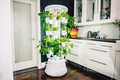 Nutritower - indoor gardening, vertical hydroponics system that lets you harvest fresh fruits and veggies in the comfort of your own home. Vertical Hydroponics, Hydroponics System, Hydroponic Gardening, Indoor Gardening, Container Gardening, Growing Plants, Growing Vegetables, Growing Microgreens, Grow Your Own Food