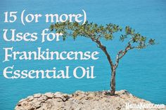 15 or more Uses for Frankincense Essential Oil Relaxing Oils, Calming Oils, Frankincense Essential Oil Uses, Doterra Essential Oils, Love Natural, Natural Herbs, Natural Health, Infused Oils, Drying Herbs