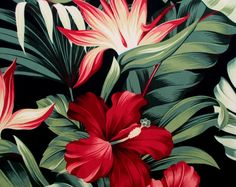 Fabric, Red Hibiscus Floral on Black, Tropical Hawaii, Bird of Paradise Flower, By the Yard