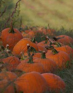 Pumpkin Patch ~ A Short Halloween Story by Sam Stormborn Ormandy Halloween Night, Fall Halloween, Halloween Clothes, Costume Halloween, Halloween Pumpkins, Happy Halloween, Fall Pictures, Pictures Of Pumpkins, Autumn Photos