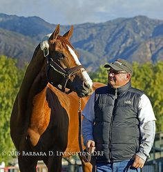 California Chrome, North America's richest racehorse of all time with $12.5 million.
