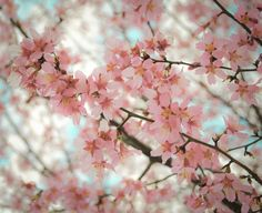 Pink Flowers Tumblr Photography Hd Images 3 HD Wallpapers