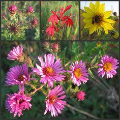 native Indiana wildflowers