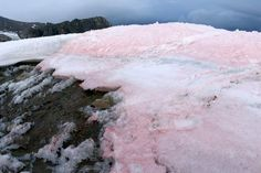 Watermelon Snow: Not Edible but Important for Climate Change