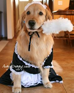 www.augiedoggy.com -- Ti wants everyone to know he's a BOY and was well compensated for this humiliation ;-)