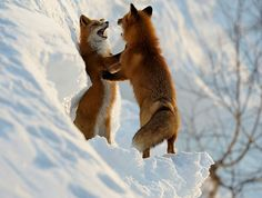 You're a fox. Let's dance.