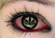 Cannabis eye Medical and Recreational Marijuana Project info www.MaritimeVintage.com     #Cannabis #Marijuana #Weed #Medical