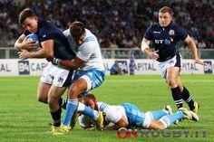 RWC 2015, Scozia: sette giocatori rilasciati ai rispettivi club - On Rugby