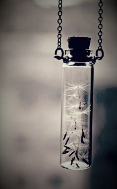 Mini Bottles, Dandelions, Mason Jar Lamp, Dandelion, Taraxacum Officinale