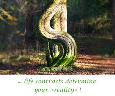 ... #life contracts determine  your >#reality< !