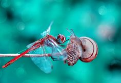 FACE TO FACE by Mustafa Öztürk on 500px Dragonfly Painting, Abstract Pictures, Insects, Butterfly, Damselflies, Face, Dragon Flies, Moth, Beautiful