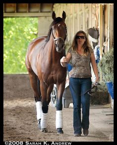 Big Brown on the mend Triple Crown Winners, Derby Winners, Most Beautiful Horses, Big Brown, Racehorse, Thoroughbred, Kentucky Derby, Horse Racing, Heavenly