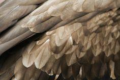 ~ wings