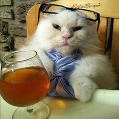 George the Kat