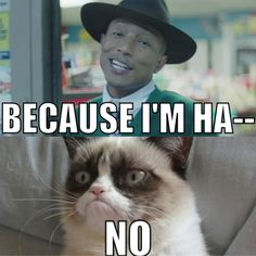 Grumpy Cat doesn't like Pharrell… na We Heart It - http://weheartit.com/entry/105762673
