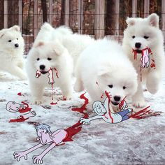 """Cutest Massacre"" by Lucas Levitan / Photo Invasion"