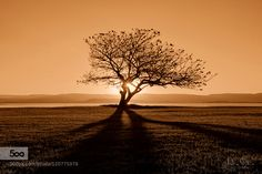 Tree Of Life by williampatino