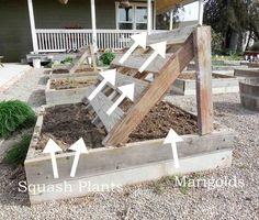 squash growing racks made out of pallets, diy, gardening, pallet, repurposing upcycling