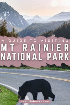 Visiting Mt Rainier National Park? Be sure to check out this guide to Mt Rainier National Park including things to do and the best Mt Rainier hikes at this awesome National Park near Seattle and Portland. #mtrainiernationalpark #washingtonstate #usatravel #nationalparks