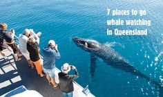 Hervey Bay is the whale watching capital of Australia but there are also plenty of opportunities to see whales in their element all along the Queensland coast. Here are seven locations to go whale watching in Queensland. 7 Places, Whale Watching, Beach Town, Sunshine State, Weekend Trips, Where To Go, Beautiful World, New Zealand, Coast