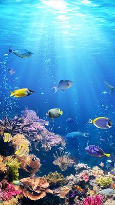 sealife wallpaper ocean life Underwater life wallpaper for your iPhone XR from Everpix Underwater Wallpaper, Ocean Underwater, Underwater Painting, Ocean Wallpaper, Tropical Wallpaper, Animal Wallpaper, Ocean Art, Ocean Life, Fish Wallpaper Iphone