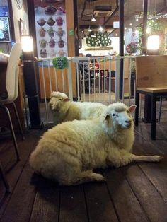 Thanks Nature Cafe in Seoul, Korea offers coffee, tea, cake, waffles and two fluffy hosts named Bocksil and Mongsil.