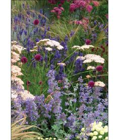 From Plants and Planting Plans for a Bee Garden: How to Design Beautiful Borders That Will Attract Bees: Maureen Little