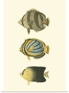 Vision Studio Poster Print Wall Art Print entitled Antique Tropical Fish IV, None