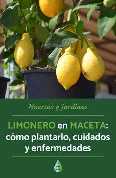 Strawberry Planters, Urban Agriculture, Wooden Planters, Gardening, Fruit Trees, Garden Projects, Garden Furniture, Beautiful Gardens, Bonsai
