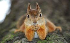 Картинки по запросу красивые картинки о животных