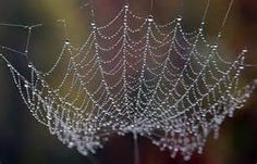 Photographs of morning dew
