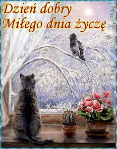 Weekend Humor, Cute Gif, Good Morning, Cute Pictures, Bird, Winter, Fotografia, Polish, Buen Dia