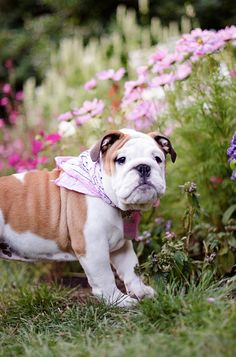 Bulldog Pup by The London Phodographer