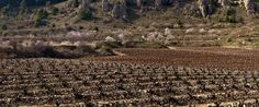 Según la memoria del pasado año, Rioja está en plena fase expansiva en mercados internacionales y con retos importantes como el aumento de superficie de viñedo.