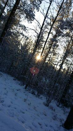 Metsässä ja auringon nousu