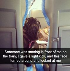 150 Of The Most Funniest Animal Snapchats Ever! #funnydogmeme