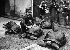 Turtle Wax at London Zoo  www.gallantbeau.com