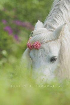 little white pony