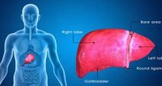 Top 15 Foods to Keep Your Liver Healthy