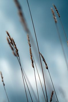 The Wind that Shakes the Barley | photography . Fotografie . photographie | Photo: una cierta mirada |