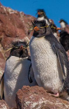 Pingüinos en el sur de  Argentina