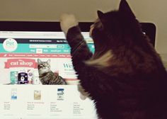 Charlie searching for his favourite cat products   Pet Happiness Delivered to Your Door with Pet Circle