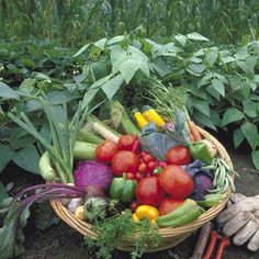 When to Harvest Vegetables guide by organic gardening