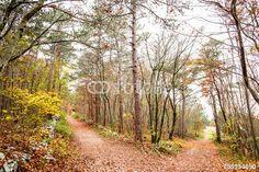 """Scarica l'immagine Royalty Free  """"autumnal landscape with path in the forest """" creata da TTL media al miglior prezzo su Fotolia . Sfoglia la nostra banca di immagini online per trovare la foto perfetta per i tuoi progetti di marketing a prezzi imbattibili!"""