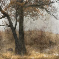 Unyielding by jamie heiden, via Flickr