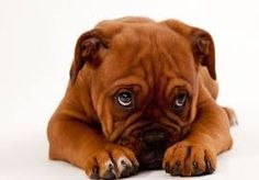 cute adorable dogs - Google Search