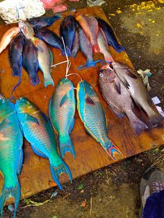 Suva Market, Suva, Fiji — by Joe Bradley. This was taken at Suva Market, I had never seen Parrot Fish for sale before. The colours were very striking, although. Parrot Fish, Parrot Toys, Fiji Islands, Cook Islands, Suva Fiji, Fiji Honeymoon, Fiji Travel, New Zealand North, Fish For Sale