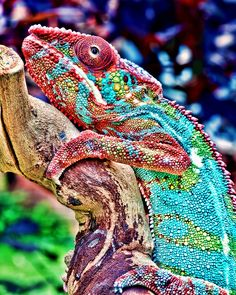 "Chameleon at the Intersection Point  Who Do I Serve and What Do I Say?  http://www.thatintersectionpoint.com/      To those in need of healing,  flight from pain of broken bones  and broken hearts,   from the attack on self:  ""Nothing is impossible,  quantum physicists have shown  particles and waves,   and weirder still,  never give up hope,  know who you are  in Einstein's supportive universe."""