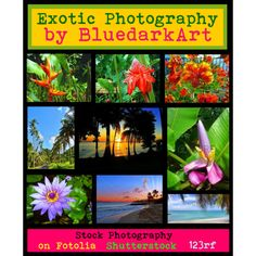"☀#Exotic #Photography by #BluedarkArt ☀ by bluedarkart on #Polyvore  ""My #Tropical #Soul"" •"